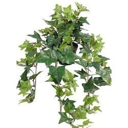 Ampelväxt Murgröna, 60 cm