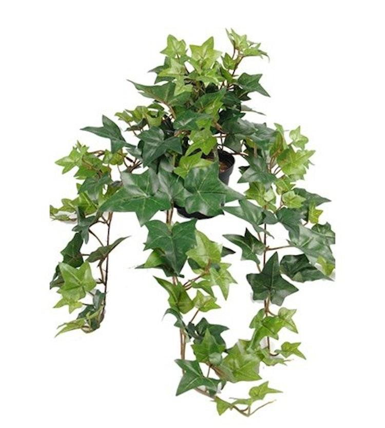 Konstgjord ampelväxt Murgröna