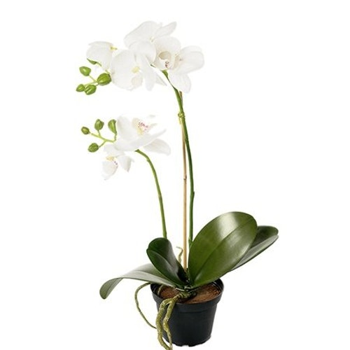 Konstgjord Phalaenopsis Vit