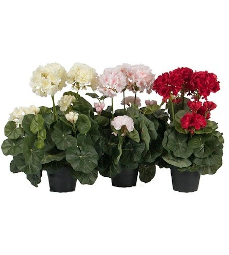 Tre verklighetstrogna pelargoner. En vit, en rosa och en röd.