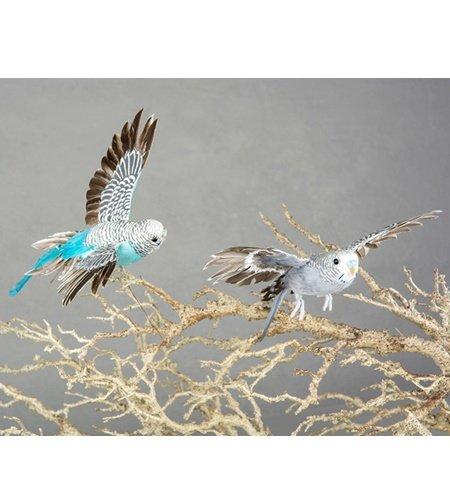 Undulat/Fågel  Flygande