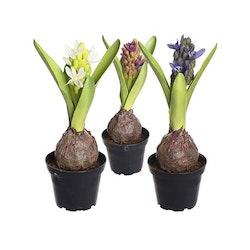 Konstgjord Hyacint Blå