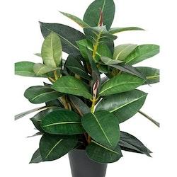 Konstgjord Ficus Robusta 40cm