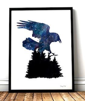 Nightsky, my Raven