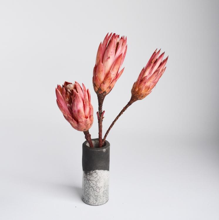 Protea Repens, pink (3 st)