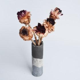 Protea Nerifolia (5 st), små
