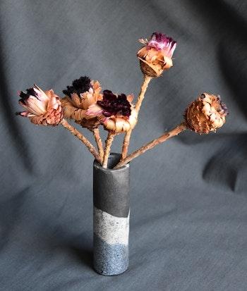 Protea Nerifolia (5 st)
