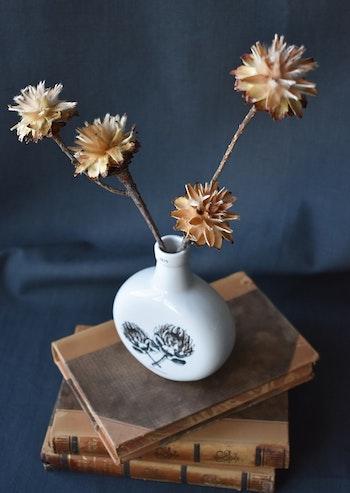 Protea Plumosum