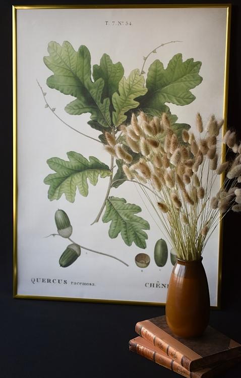 Poster - Ekollon, 50x70 cm