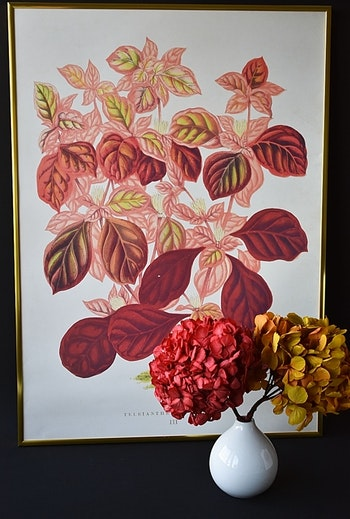 Poster - Blad, 50x70 cm