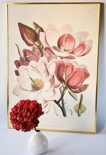 Poster - Magnolia rosa, 50x70 cm