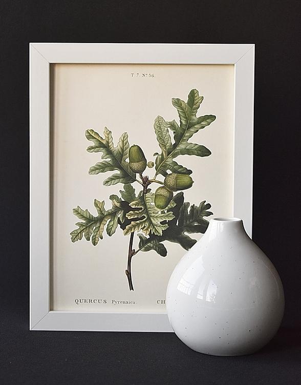 Poster - Ekollon, 18x24 cm