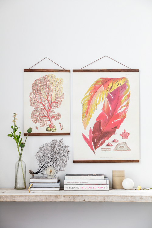 Poster - Korall, 35x50 cm