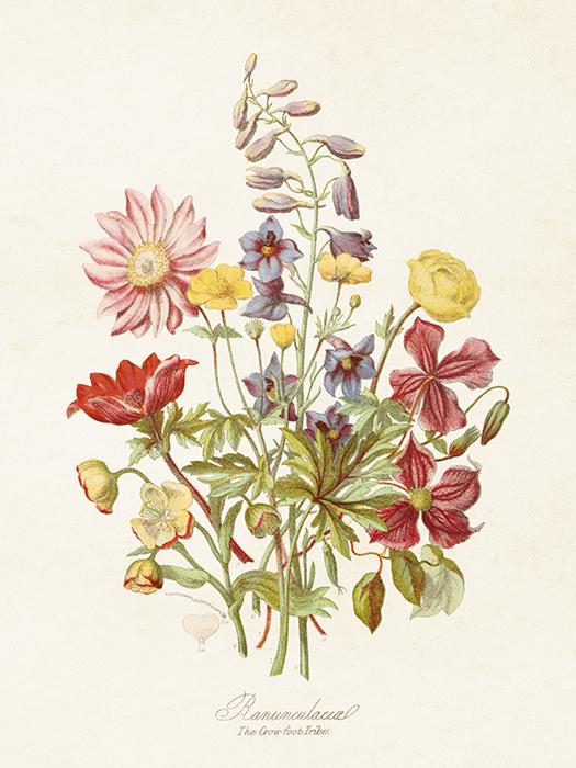 Poster - Blomsteräng, 18x24 cm