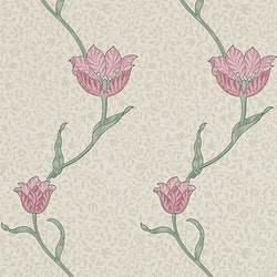 Garden Tulip 210391
