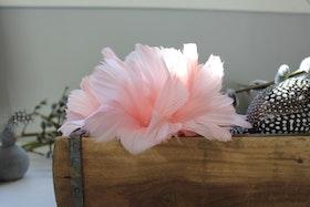 Fjäderblomma Rosa