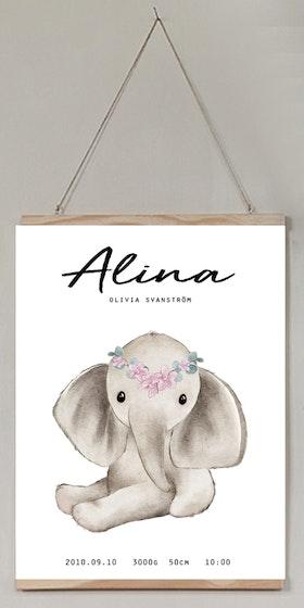 Födelseposter Elephant flower