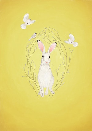White hare - yellow