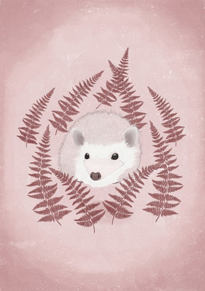 Hedgehog Pinkish