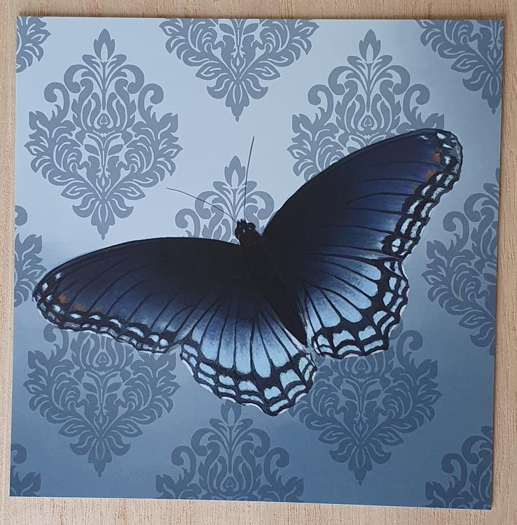 Fjäril mörkblå
