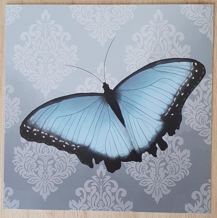 Fjäril ljusblå