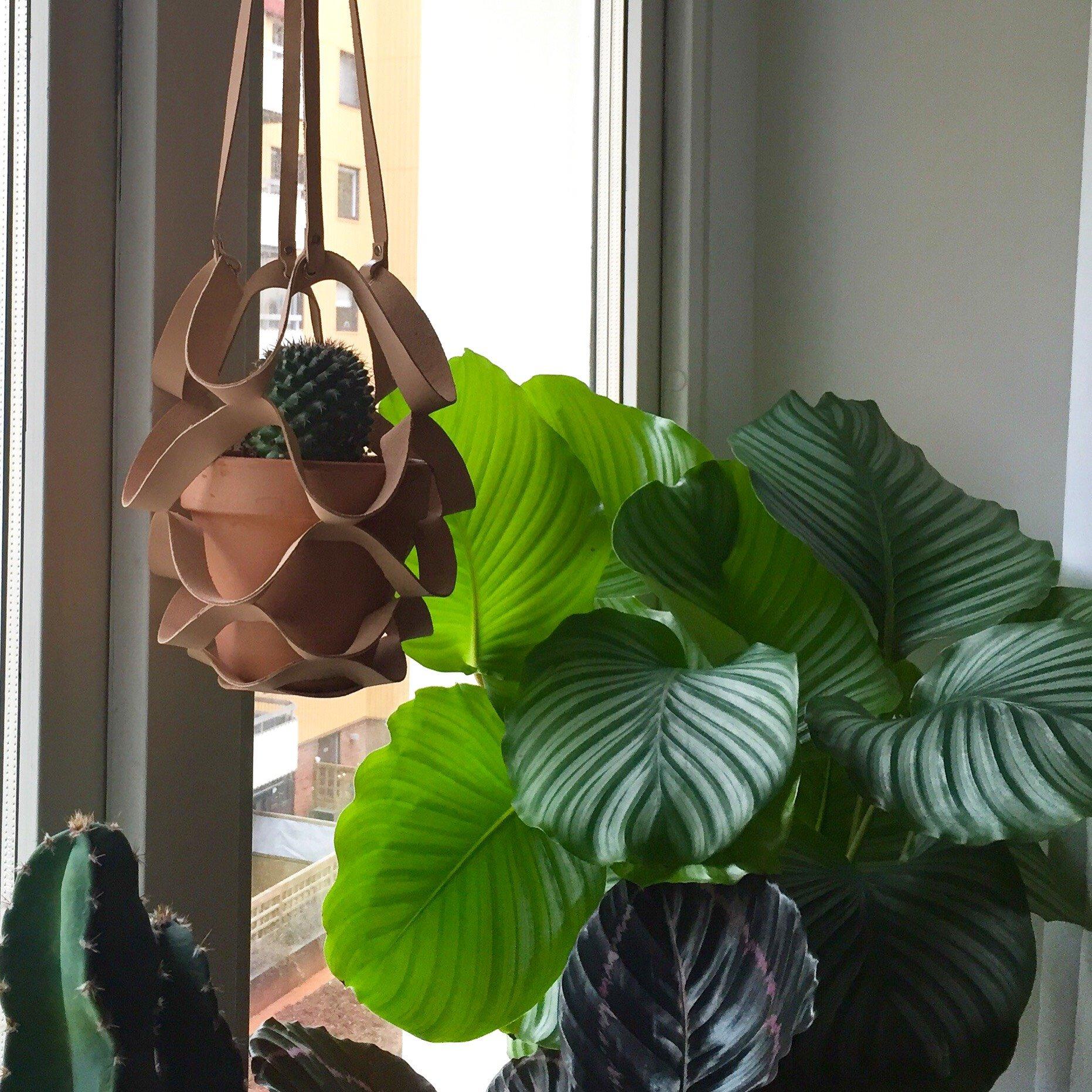 • Planthanger Basket Medium Raw •
