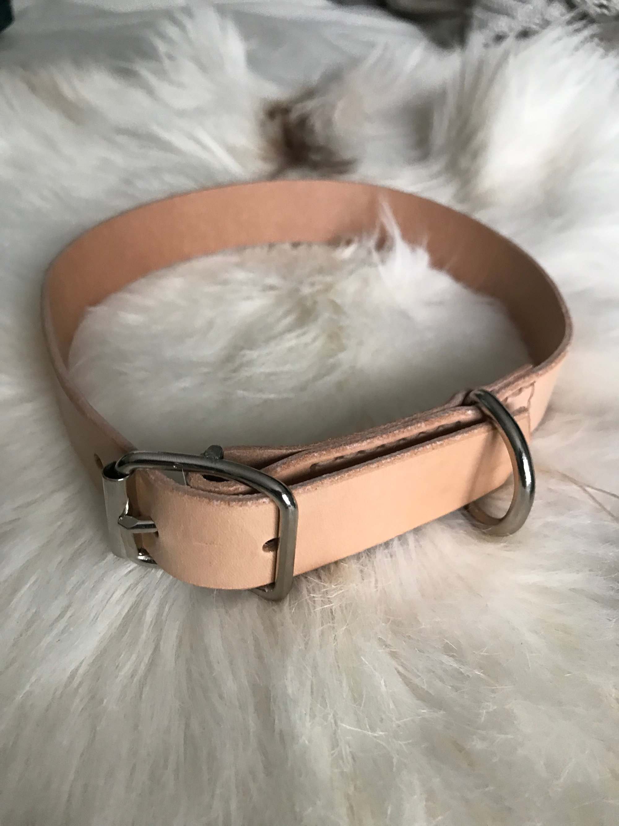• Dogcollar Clean • 5 Colors •