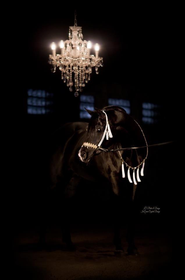Häst tillbehör - Kajsa Fasth Design