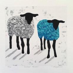 Gicleétryck får, turkos/blå