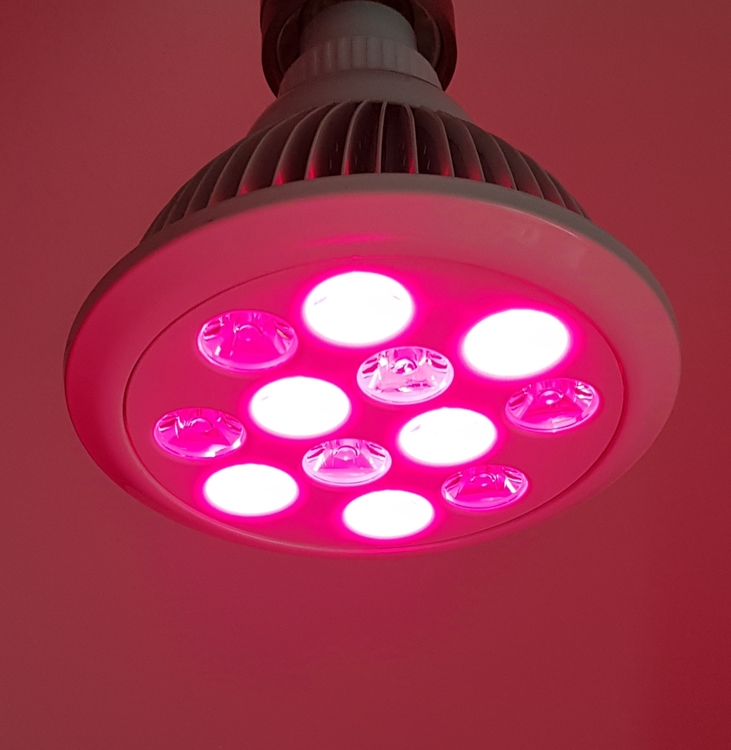 Redlight Therapy mini (660 & 850 nm)
