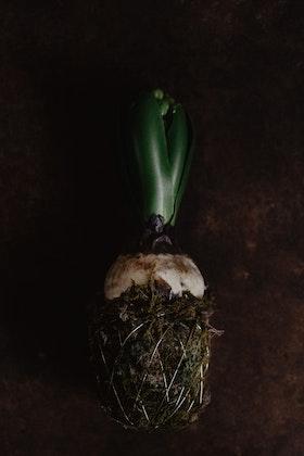 Hyacint KNOPP konstgjord