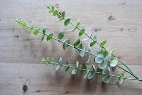 Eukalyptuskvist konstgjord