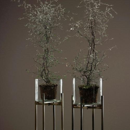 Glascylinder på stativ 15 cm