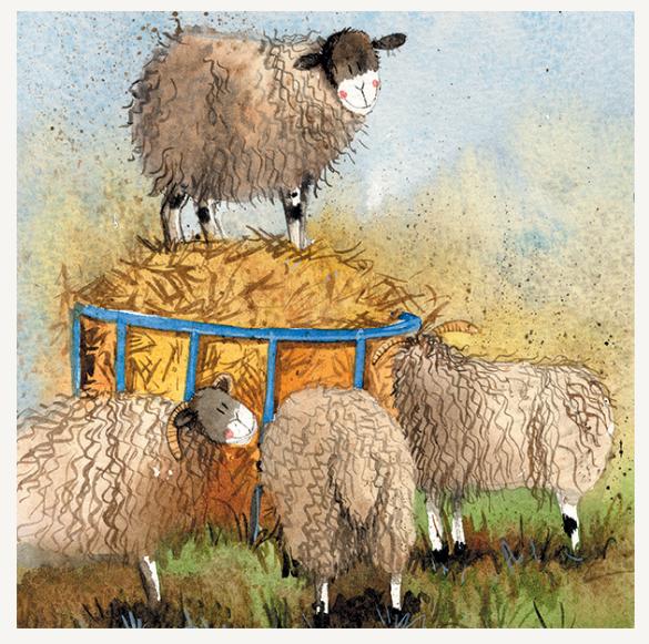 Sheep & Hay Card / Sheep & Hay kort