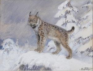 LODJUR 1924 av NILS TIRÉN