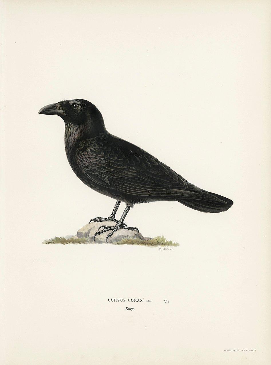 KORP av Magnus von Wright