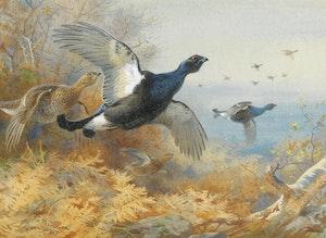 ORRPAR I FLUKT av ARCHIBALD THORNBURN Orre Konsttryckt på duk