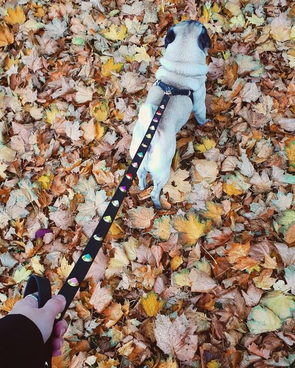 Dog Leash 'Flora' - Black