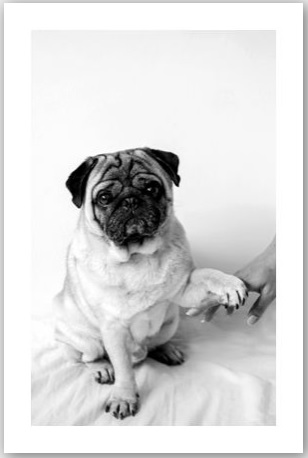 [Pug Perfect] Best Friend Poster