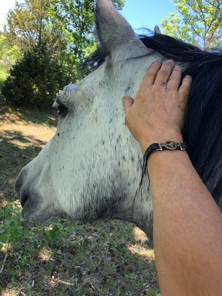 Hästbiten LÄDER