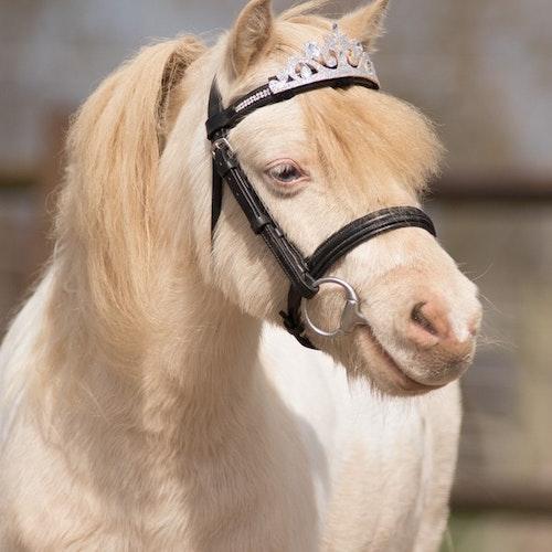 KRONA till häst