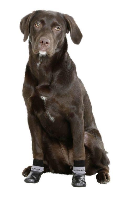 Hundsko hundstrumpa