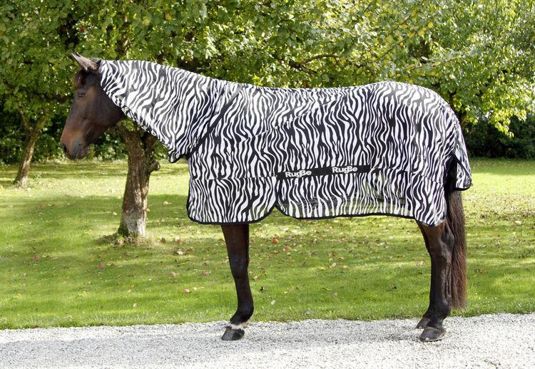 RugBe Zebra