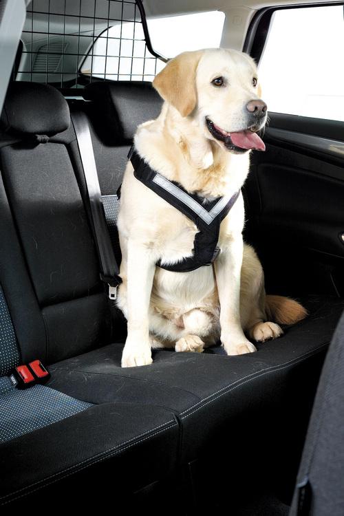 AllSafe Säkerhetbälte för hund