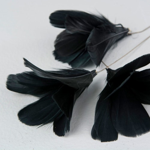 Fjäderblomma svart