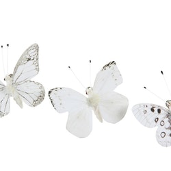 Fjärilar små vita
