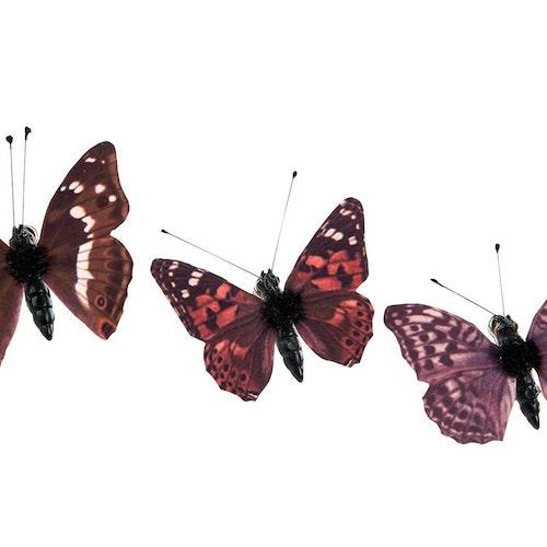 Fjärilar brun/vinröda