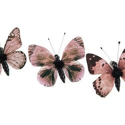 Fjärilar små brun/beige