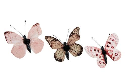 Fjärilar små brun/rosa