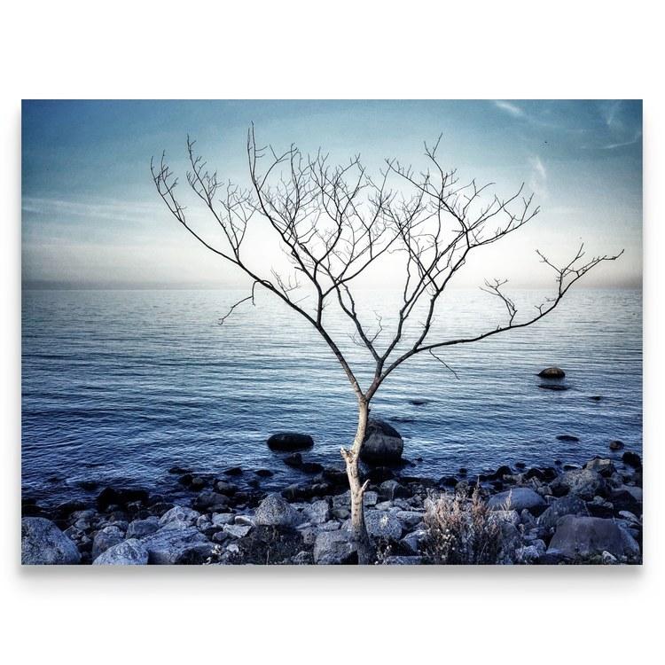 Print Strandträd